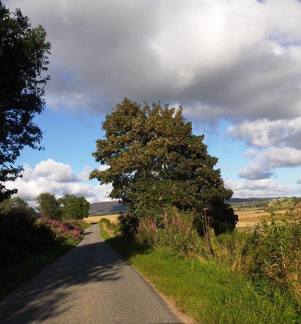 A 'conker' tree near South Footie