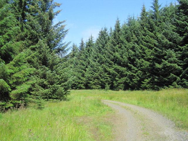 Forest Track through Scotchcoultard Warste