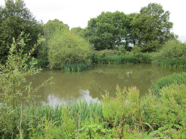Pond at Bradley Green