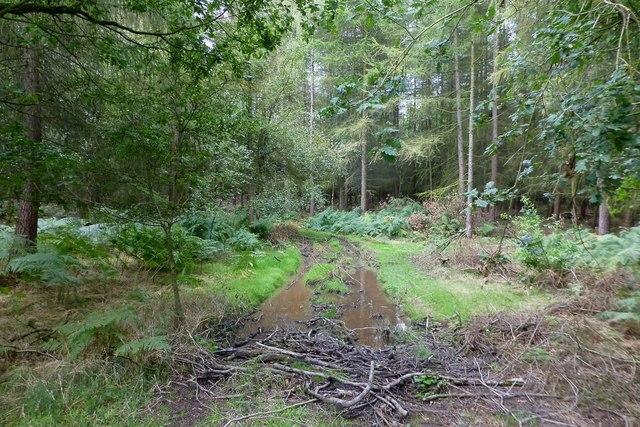 Boggy track in Bentley Park Wood