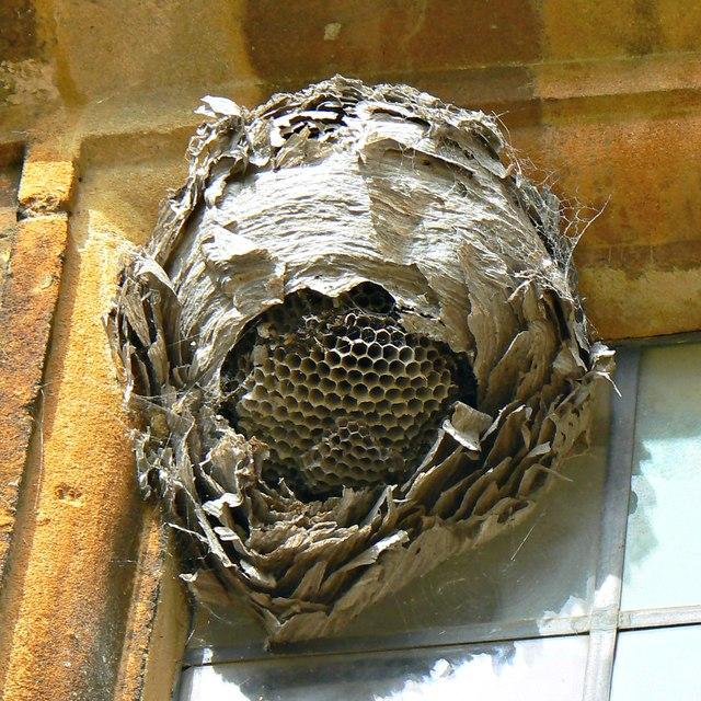 Wasps' nest and cobwebs, Chastleton House, Chastleton, Oxfordshire
