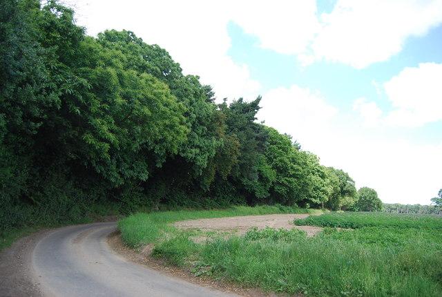 Hale's Grove