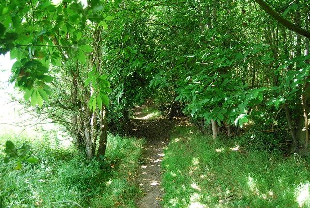 Bridleway, Hale's Grove