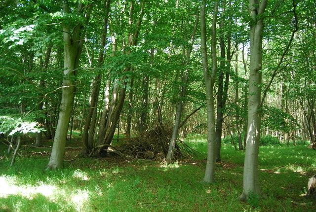 Hide, Hale's Grove