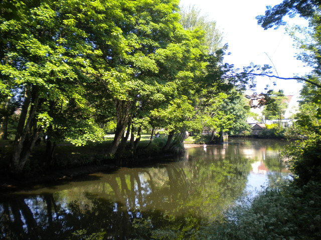 Trees overhanging the River Wensum, Norwich
