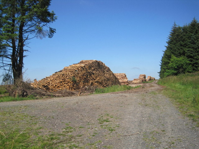 Log Stacking and Forest Tracks at Grindon Green