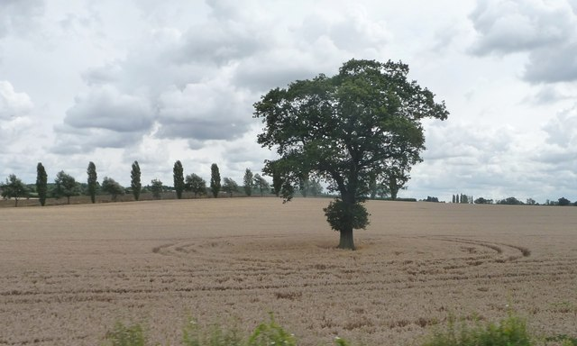 Lone tree in a farmed circle