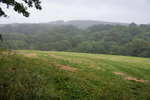 Grassy field above Mawgan Creek
