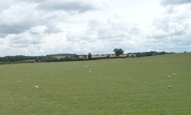 Sheep pasture south-west of College Farm