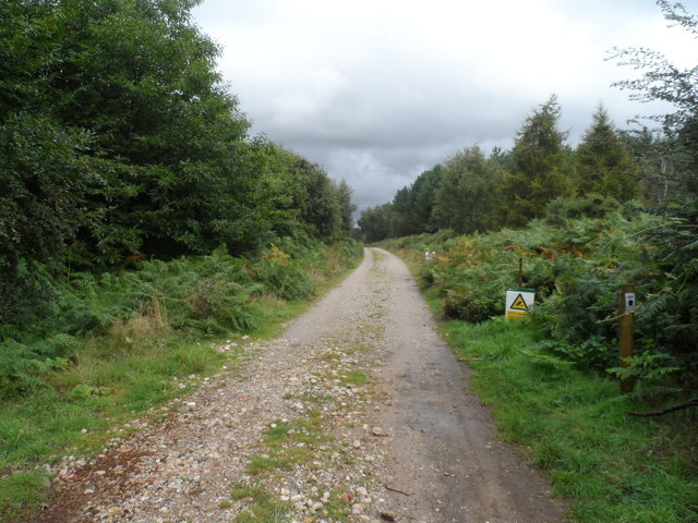 Forestry Commission road