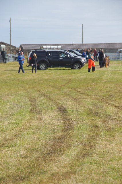 Tracks in the field at the Unst Show, Haroldswick