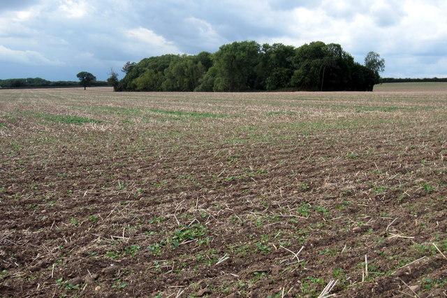 Stanleigh plantation