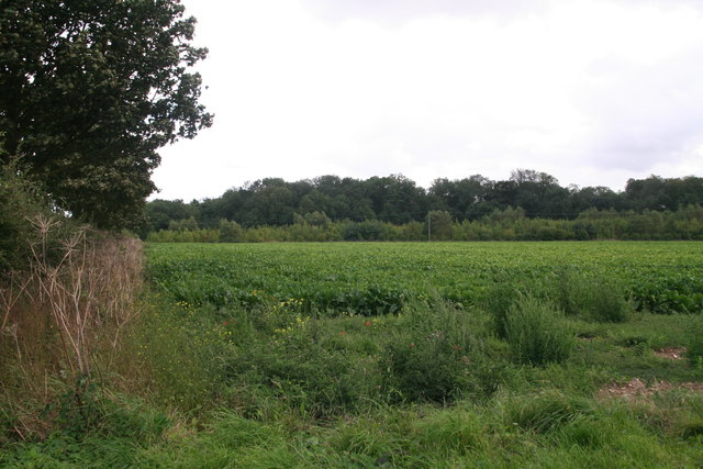 Ash Holt across a beet field, from the road to Cuxwold
