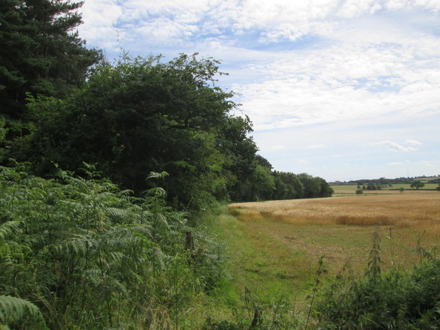 Edge  of  Moor  Covert.  Rabbit  Hill