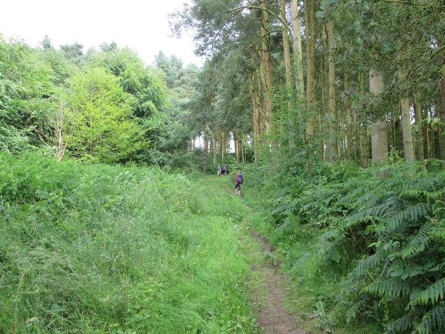 Footpath  through  woods  to  Kennythorpe