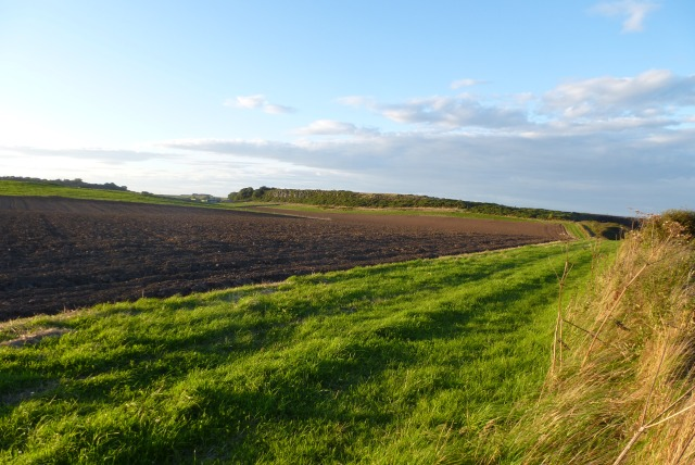 Farmland in the evening sun