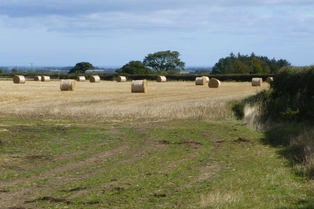 Cylindrical straw bales