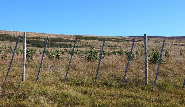 Native tree planting on Meall Achadh na Luachrach