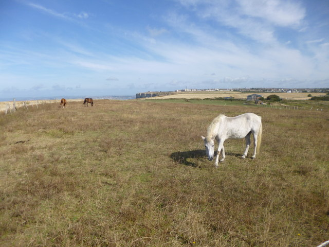 Southwell, horse grazing
