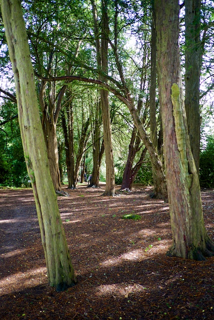 Stanway House Wood