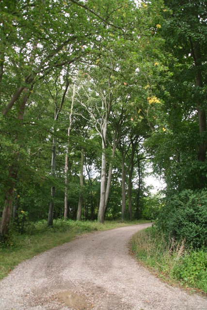 Cuxwold: wooded driveway on the Rothwell road out of the village
