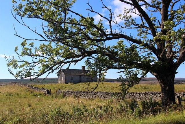 Bothy near Colaboll through an old Ash tree