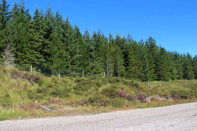 Roadside plantation on Leathad Fiag by the A838
