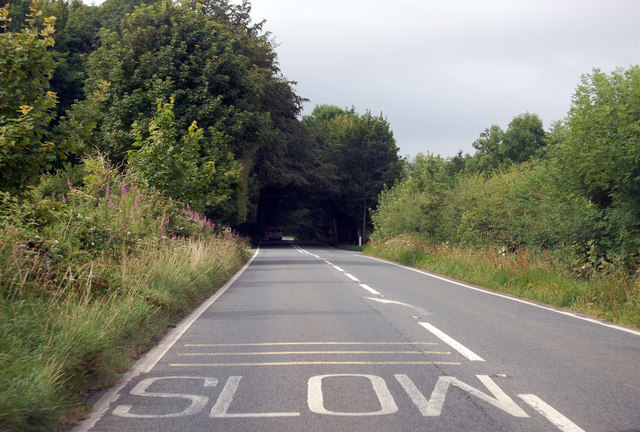 A39 entering wooded area