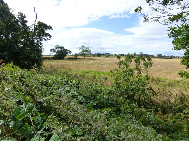 Brambles and cereals