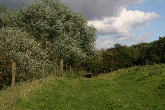 Bridleway and willows alongside Waithe Beck