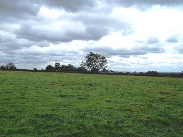 Fallow Field near Marstoncommon Farm