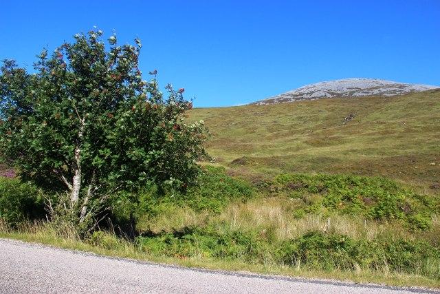 The slopes of Meallan Liath Mòr