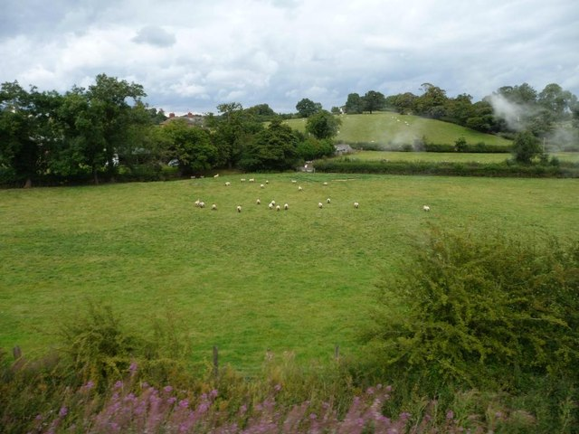 Sheep pasture, south of Brook House Farm