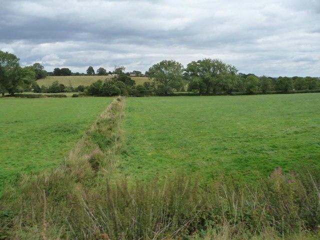 Field boundary, Danzey Green