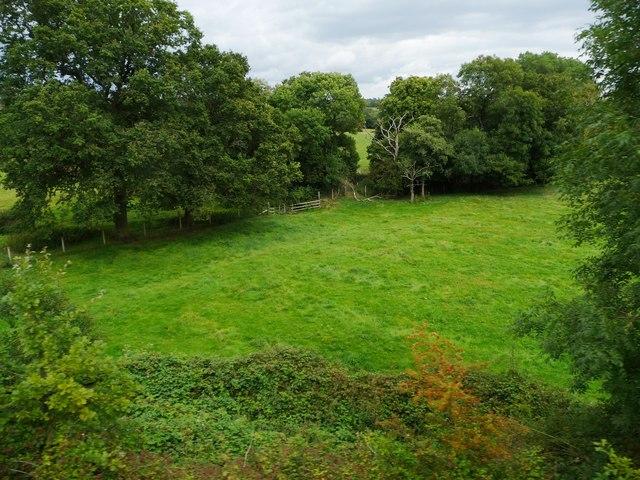 Trees along a stream, south of Danzey Green Farm