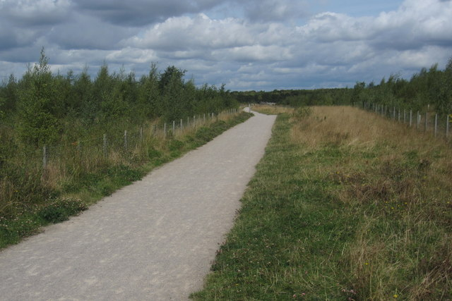 Cycle path through new woodland  towards the cafe