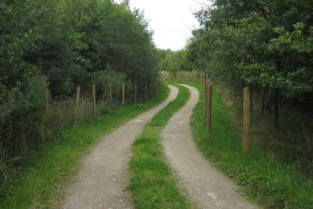 Track into conservation area