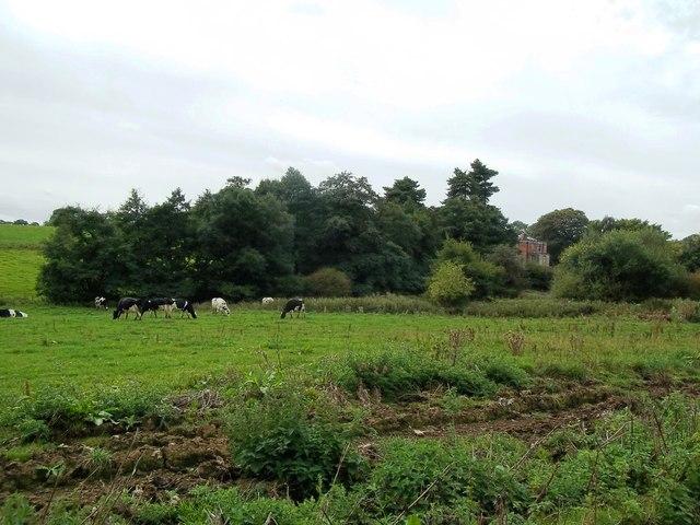 Livestock near Stydd Hall