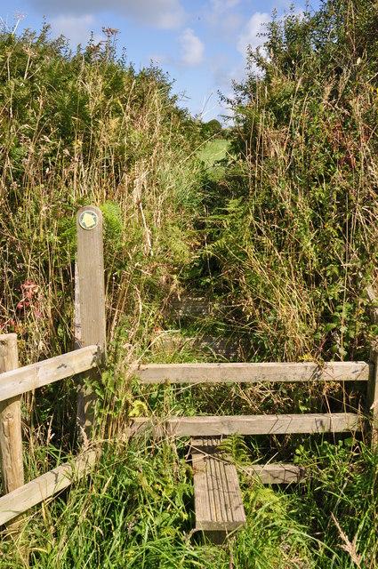 North Devon : Stile & Hedgerow