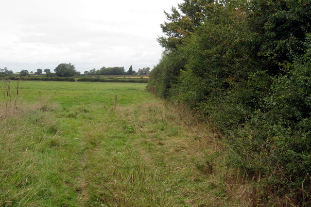 Hedge and pasture by Shelford Lane