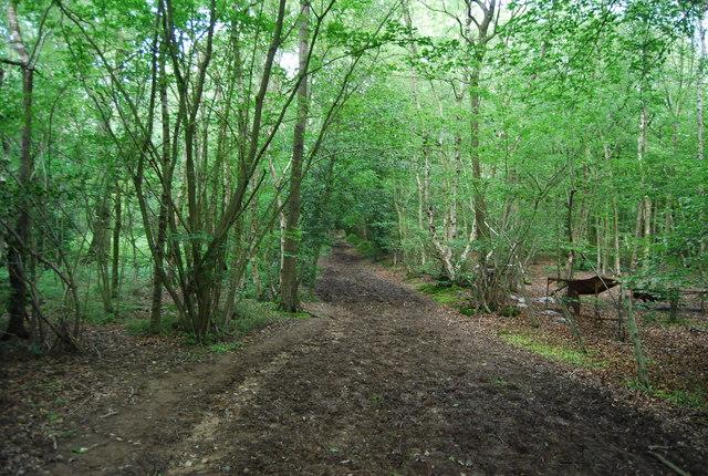 Vanguard Way, Wet Wood
