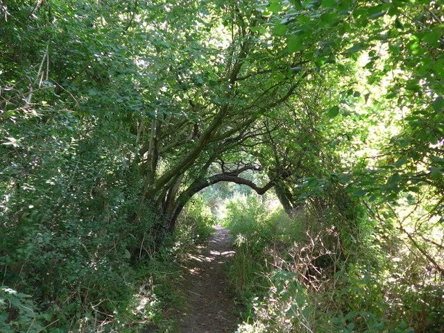 South Downs Way, Exton to Buriton (16)