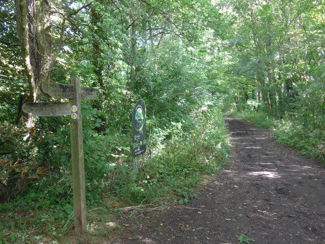 South Downs Way, Exton to Buriton (18)