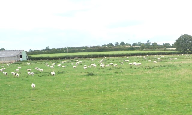 Sheep pasture, south-east of Pennyford Hall