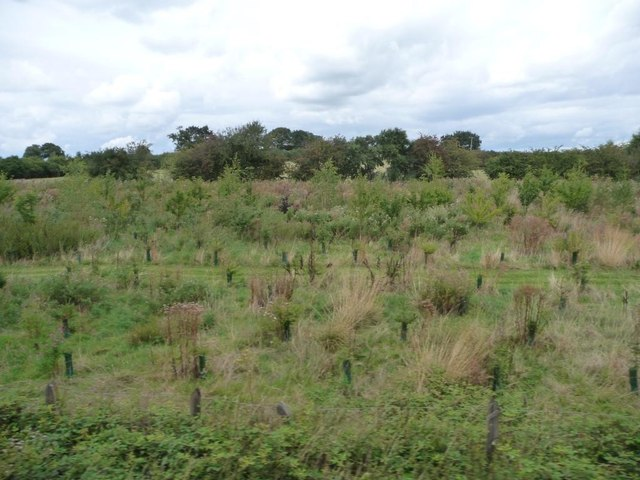 Young plantation, west of Silesbourne Farm
