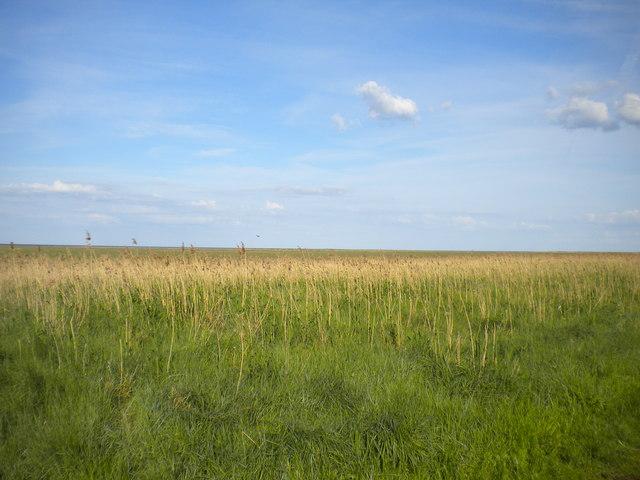 Coastal marshes, Saltfleetby (1)