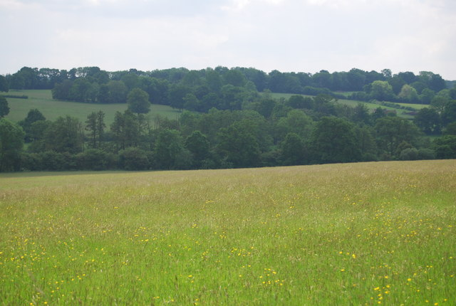 A Sussex meadow