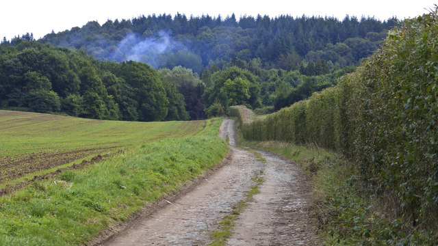 Track to Glasshampton Monastery