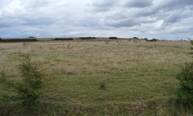 Rough grazing between the railway lines, Bearley Cross