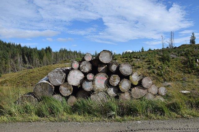 Abandoned log stack